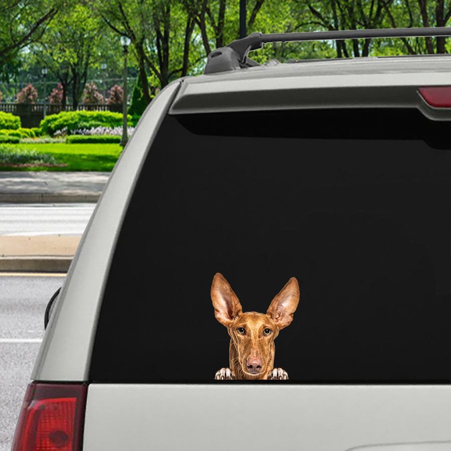 Can You See Me Now - Podenco Canario Auto / Deur / Koelkast / Laptop Sticker V1