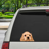 Can You See Me Now - American Cocker Spaniel Car/ Door/ Fridge/ Laptop Sticker V1