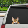 Can You See Me Now - Bengal Cat Car/ Door/ Fridge/ Laptop Sticker V1