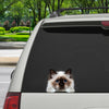 Can You See Me Now - Birman Cat Car/ Door/ Fridge/ Laptop Sticker V1