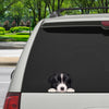 Can You See Me Now - Border Collie Car/ Door/ Fridge/ Laptop Sticker V1