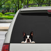 Can You See Me Now - Boston Terrier Car/ Door/ Fridge/ Laptop Sticker V1