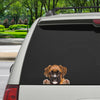 Can You See Me Now - Boxer Car/ Door/ Fridge/ Laptop Sticker V1