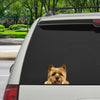 Can You See Me Now - Cairn Terrier Car/ Door/ Fridge/ Laptop Sticker V1