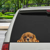 Can You See Me Now - Cavalier King Charles Spaniel Car/ Door/ Fridge/ Laptop Sticker V2