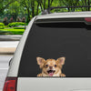 Can You See Me Now - Chihuahua Car/ Door/ Fridge/ Laptop Sticker V1