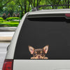 Can You See Me Now - Chihuahua Car/ Door/ Fridge/ Laptop Sticker V3