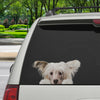 Can You See Me Now - Chinese Crested Car/ Door/ Fridge/ Laptop Sticker V1