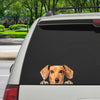 Can You See Me Now - Dachshund Car/ Door/ Fridge/ Laptop Sticker V1
