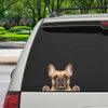 Can You See Me Now - French Bulldog Car/ Door/ Fridge/ Laptop Sticker V1