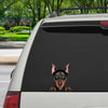 Can You See Me Now - German Pinscher Car/ Door/ Fridge/ Laptop Sticker V1