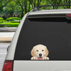 Can You See Me Now - Golden Retriever Car/ Door/ Fridge/ Laptop Sticker V1