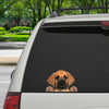 Can You See Me Now - Great Dane Car/ Door/ Fridge/ Laptop Sticker V1