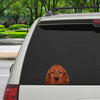 Can You See Me Now - Irish Setter Car / Door / Fridge / Laptop Sticker V1