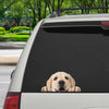 Can You See Me Now - Labrador Car/ Door/ Fridge/ Laptop Sticker V1