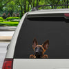 Can You See Me Now - Belgian Malinois Car/ Door/ Fridge/ Laptop Sticker V1