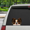 Can You See Me Now - Papillon Car/ Door/ Fridge/ Laptop Sticker V1