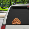 Can You See Me Now - Poodle Car/ Door/ Fridge/ Laptop Sticker V1