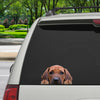Can You See Me Now - Rhodesian Ridgeback Car/ Door/ Fridge/ Laptop Sticker V1