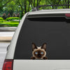 Can You See Me Now - Siamese Cat Car/ Door/ Fridge/ Laptop Sticker V1