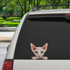 Can You See Me Now - Sphynx Cat Car/ Door/ Fridge/ Laptop Sticker V1
