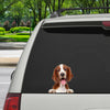 Can You See Me Now - Welsh Springer Spaniel Car/ Door/ Fridge/ Laptop Sticker V1