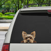 Can You See Me Now - Yorkshire Terrier Car/ Door/ Fridge/ Laptop Sticker V1