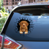Get In - It's Time For Shopping - Nova Scotia Duck Tolling Retriever Car/ Door/ Fridge/ Laptop Sticker V1