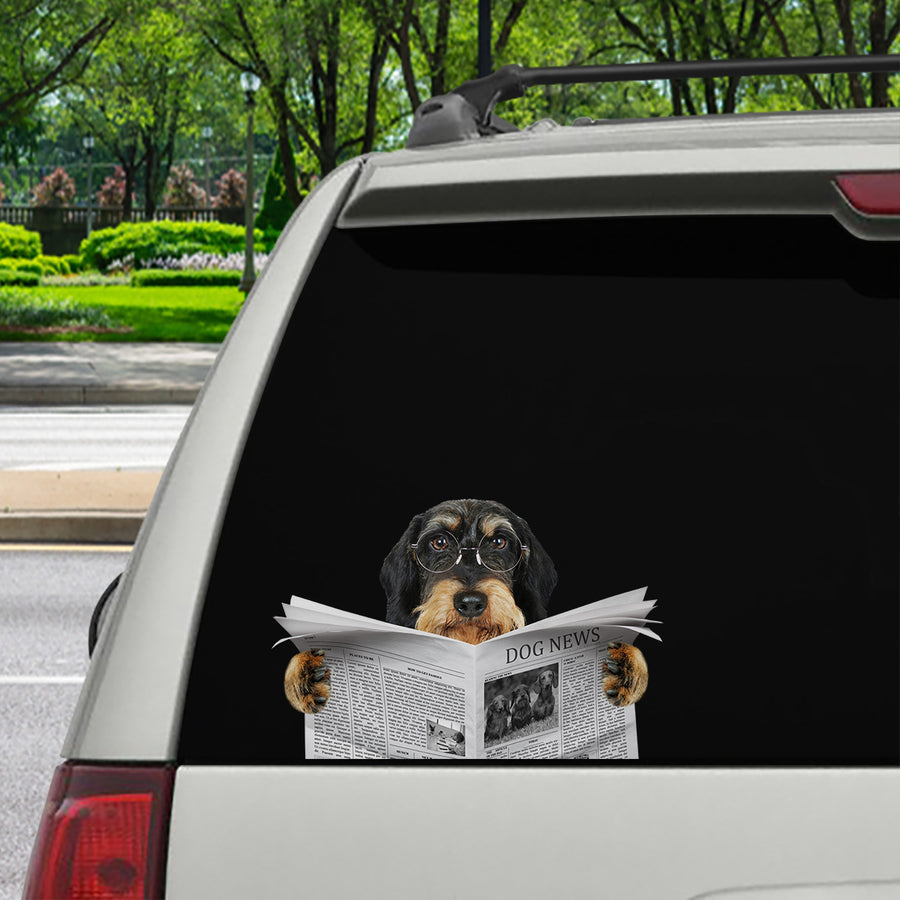 Have You Read The News Today - Wire Haired Dachshund Car/ Door/ Fridge/ Laptop Sticker V1