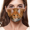 Maine Coon Cat F-Mask V1