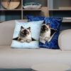 They Steal Your Couch - Birman Cat Pillow Cases V1 (Set of 2)