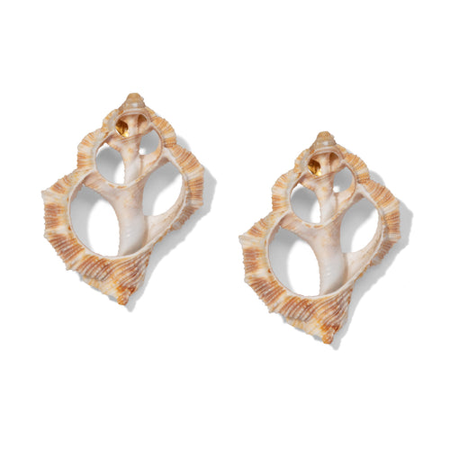 Pierced Horn Shell Earrings