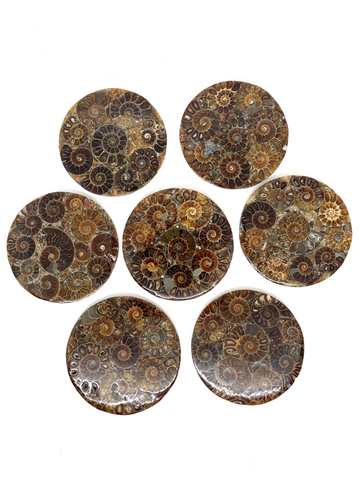 Ammonite Display Plate - 8cm