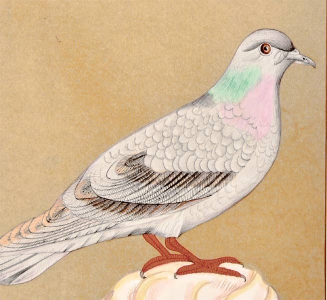 Pigeon - Minature Painting