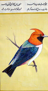 Bird Painting II - Water Color Painting