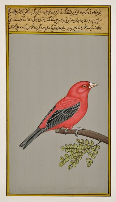 Beautiful Bird - Miniature Painting