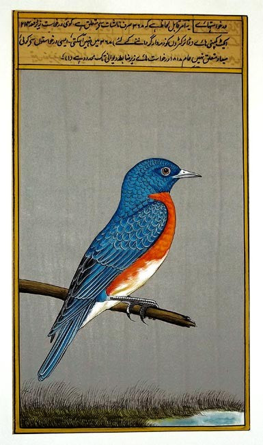 Blue Bird - Miniature Painting