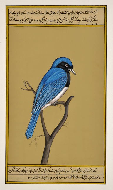 Miniature Painting 'Blue Sparrow'