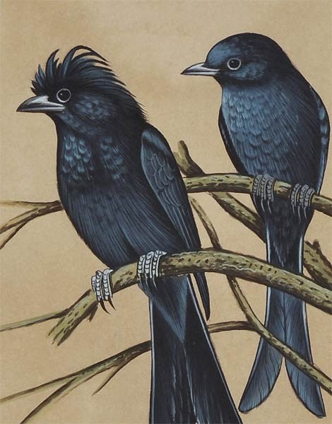 'Black Drongos' Miniature Painting