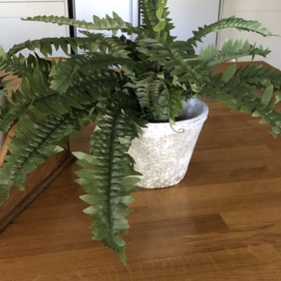 Faux fern houseplant