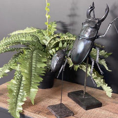 Blue Black Beetle Sculpture, Large