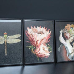 Dragonfly poster and black frame, 30 x 40cm