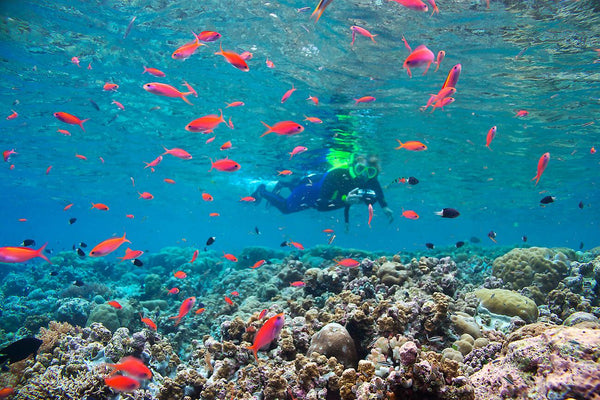 Must Snorkel Destination-Palau