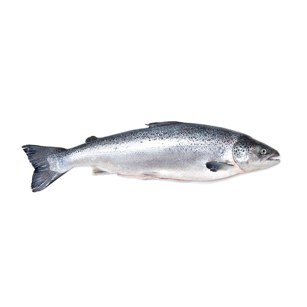 Atlantic Salmon (Per Portions and Fillets)