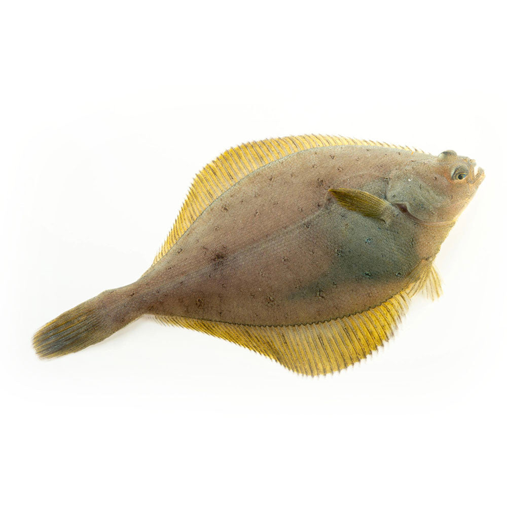 Yellowfin Sole