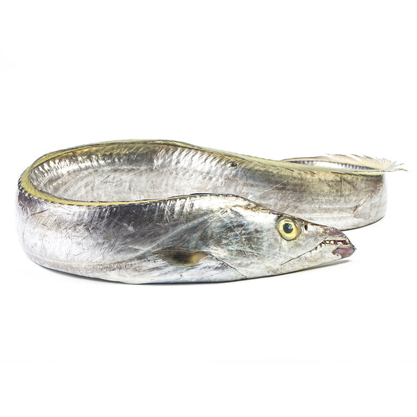Ribbonfish - Largehead Hairtail