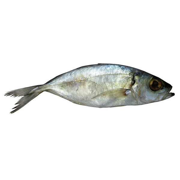 Mackerel (Split)