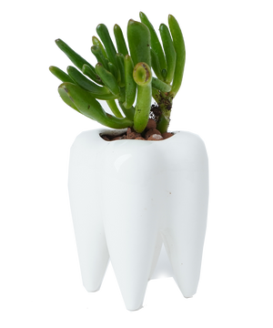 TOOTH plant