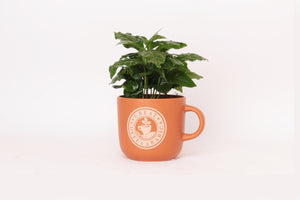 mug plant | colored coffee mug
