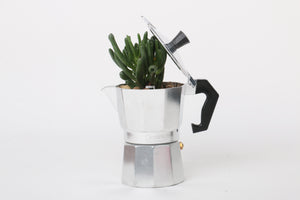 coffee maker  plant